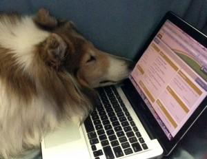 Lassie at computer