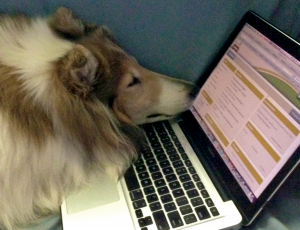 Lassie and MacBook